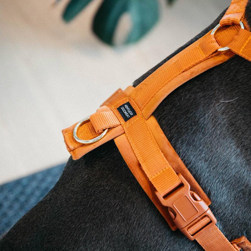 Active Dog Harness Velvet Orange 3